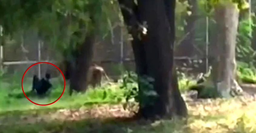 Man Sits Face-To-Face With Lion At Enclosure In Delhi Zoo