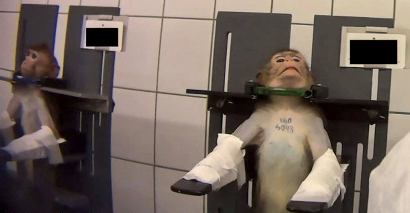 Horror animal testing lab with shackled monkeys