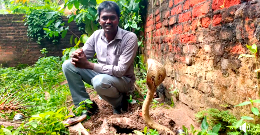 Vava Suresh caught Golden Cobra