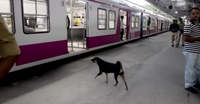 Abandoned Dog is Now Assisting Railway Force Personnel