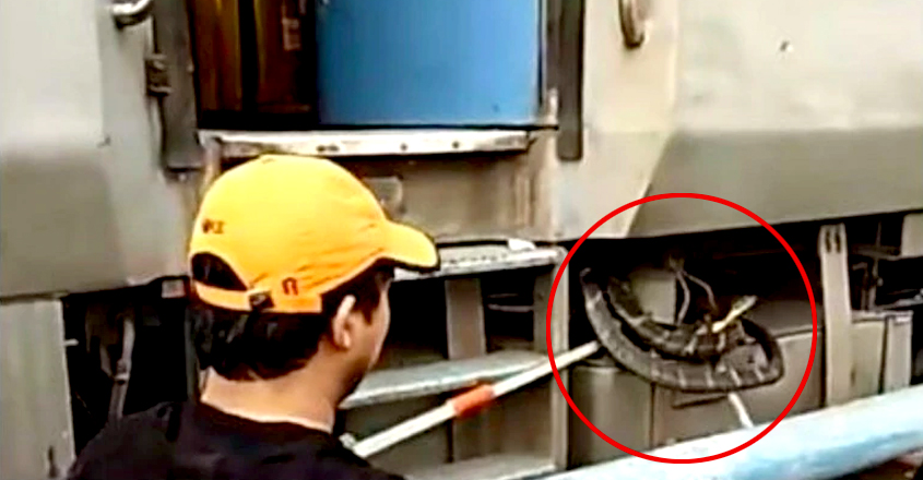 10-foot King Cobra rescued from train in Uttarakhand