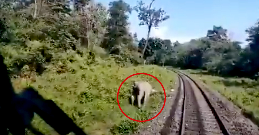 West Bengal Driver Applies Brakes Just In Time To Save Elephant & Its Calf Crossing Train Track