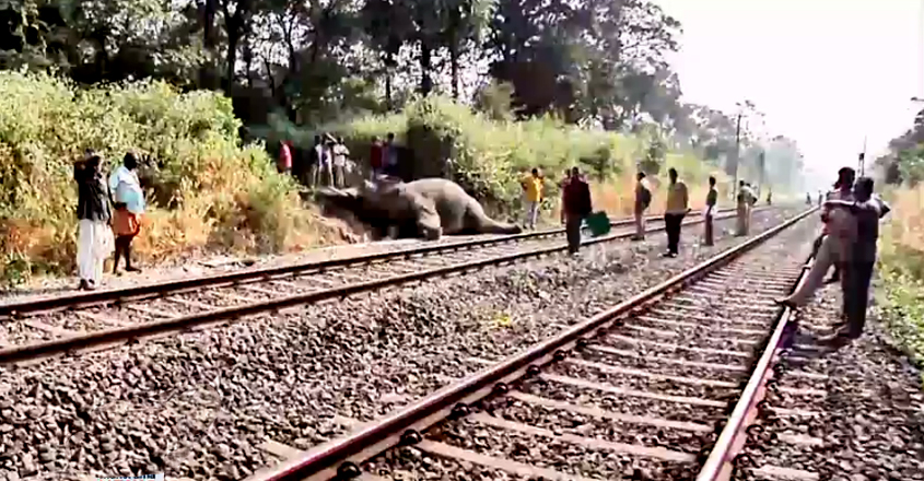 elephant killed as train smashes it at palakkad
