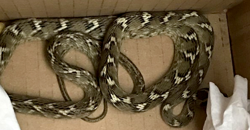 Snake survives 5,000-mile lorry journey from India to Essex