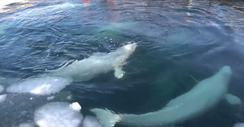Russian Whale Jail