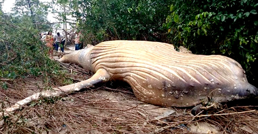Whale Found Dead In The Middle Of Amazon Jungle