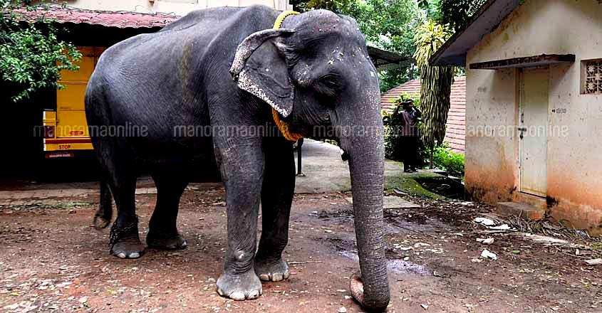 Elephant Dakshayani