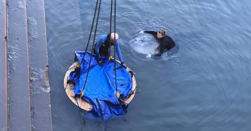 sunfish rescued from dry dock