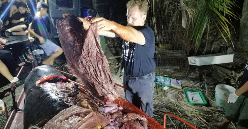 Dead Whale With 40kg of Plastic in Its Guts