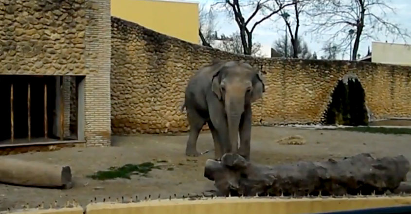 World's 'Saddest' Elephant Flavia