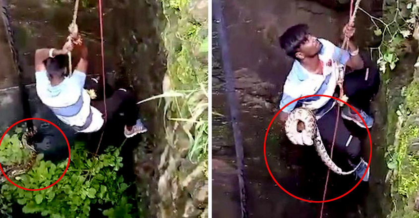 Guy Climbs Down Well To Save Python