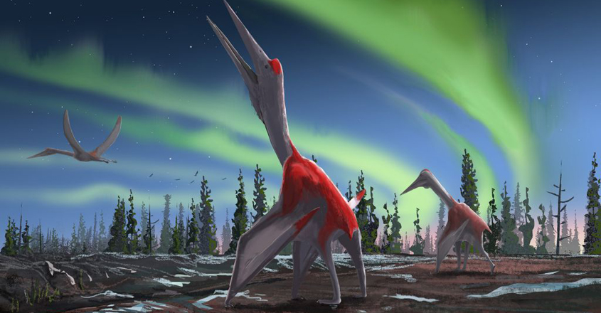 Newly Discovered Pterosaur Was One of The Biggest Flying Reptiles Ever