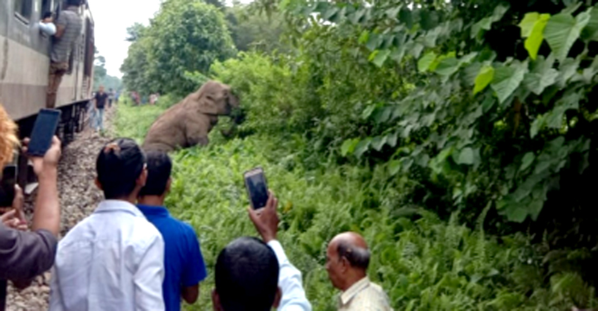 Elephant In WB Died After Being Hit By Train