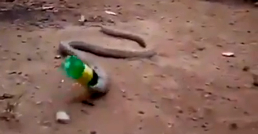 Cobra Throws Up Plastic Bottle
