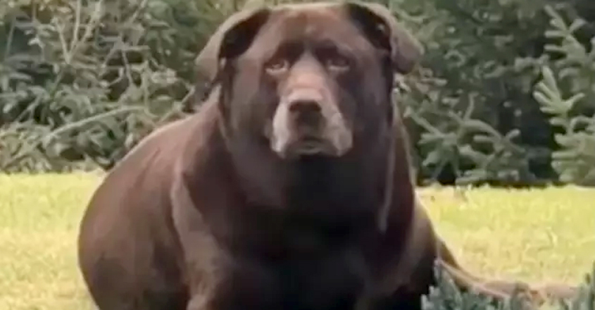 Dog Is Mistaken For A Bear
