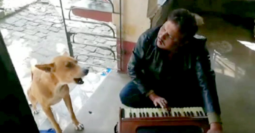 Talented Doggo Joining His Owner to 'Sing' Ranu Mondal's Viral Song