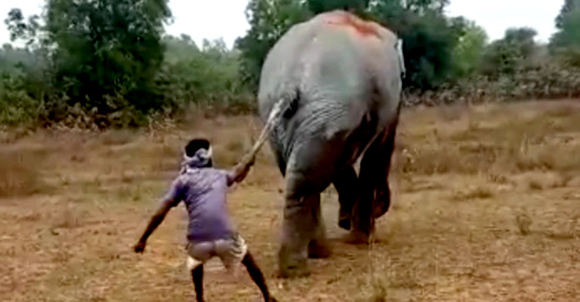Gut-wrenching video of man pulling elephant's tail in West Bengal