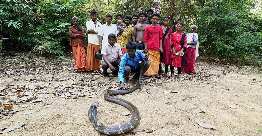 Vava Suresh caught king cobra