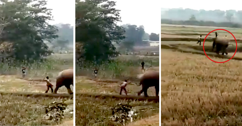 Man escapes after hitting innocent elephant