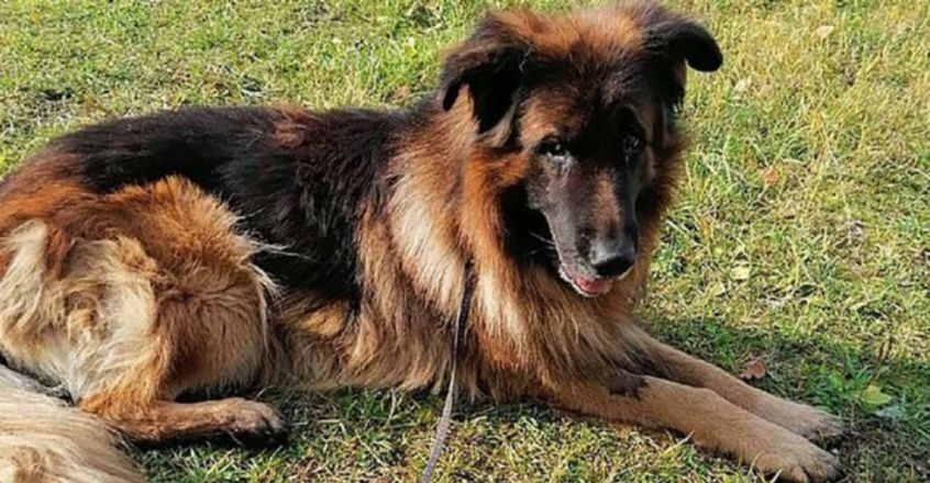 Dog who was 'put down' with a lethal injection and then buried digs himself out then crawls to safety in Russia