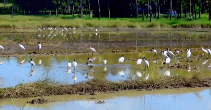 Migratory bird spotted in Kannur