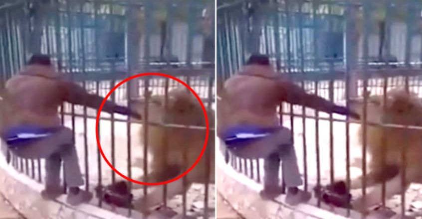 Lion savages zoo worker's hand after he tried to pet it