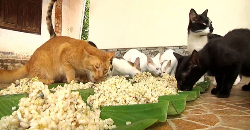 Family Feeds 22 Cats Every Day