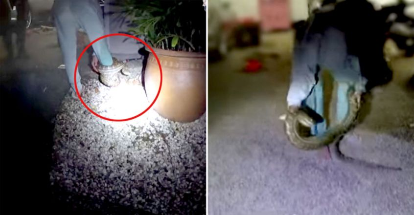 Horrifying Video Shows Python Coiled Around Woman's Leg