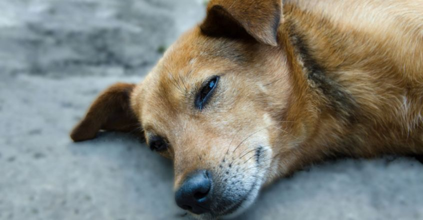 Dog sexually assaulted in shopping hub in Mumbai