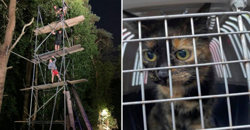 An entire town helped rescue a cat stuck 40-ft up a tree for four days