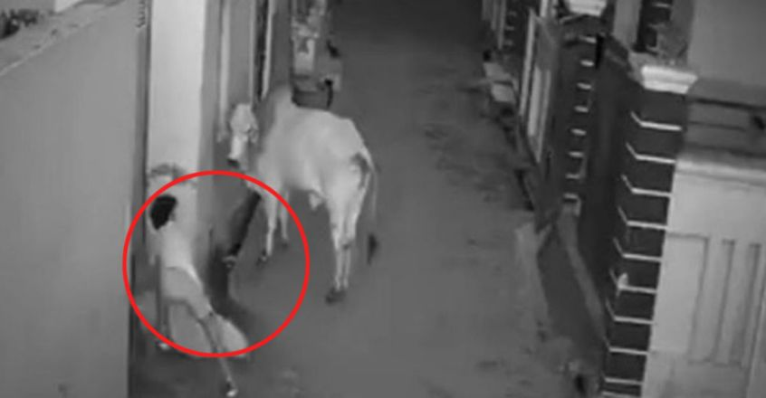 Haryana boy saves grandmother from bull