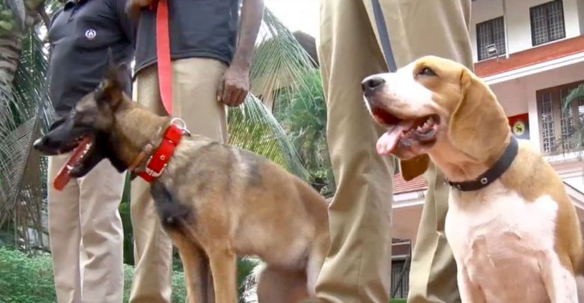 Two premium breeds add teeth to police dog squad
