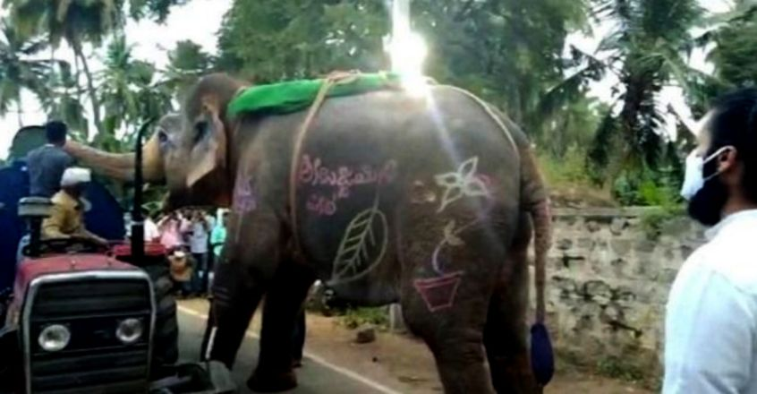 Elephant Stops Water Tanker On The Road In Order To Quench Its Thirst