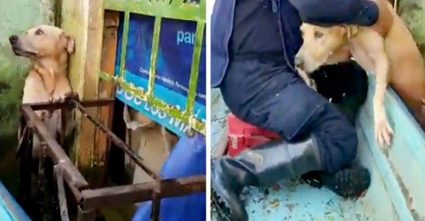 Doggo stranded in Mexico flood gets rescued, video may leave you teary-eyed