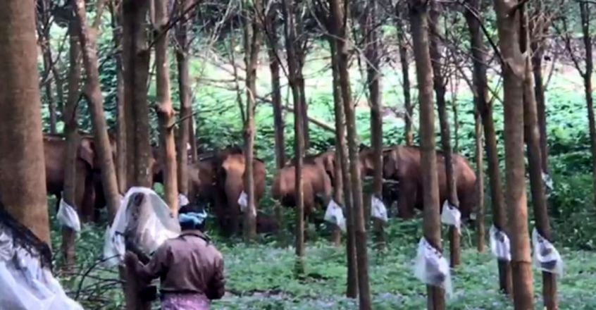 Wild elephants pose a threat to people