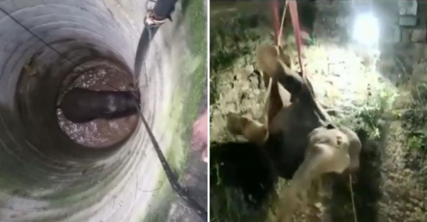 Elephant Trapped In 50-Foot Well Rescued In Tamil Nadu