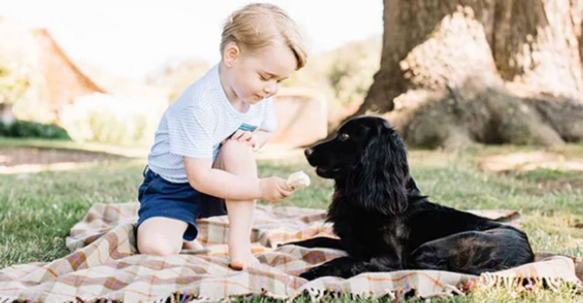 Prince William And Kate Say Goodbye To Their Family Dog
