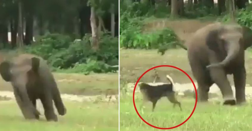 This Baby Elephant Found A Friend In A Dog