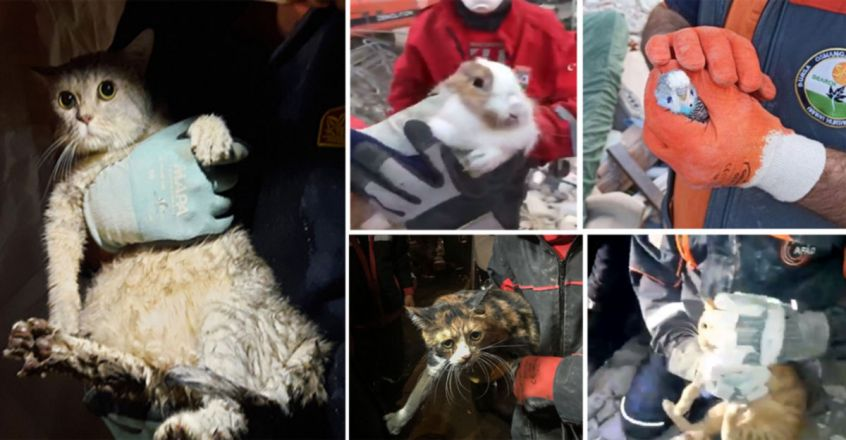 Animal survivors of the earthquake in Turkey's Izmir