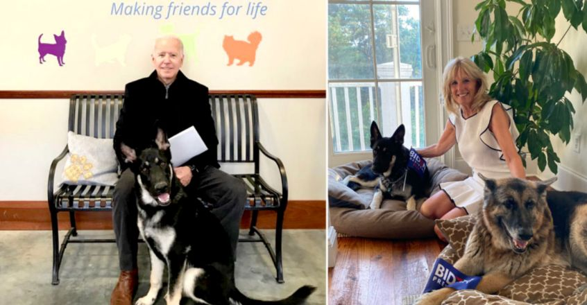 Champ And Major Biden: Meet The Future First Dogs Of America