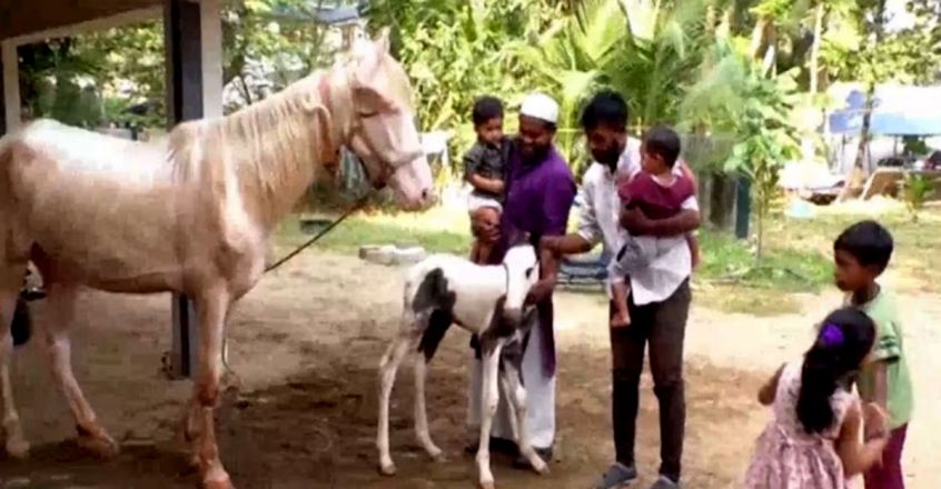 Paravur welcomes baby horse Adam
