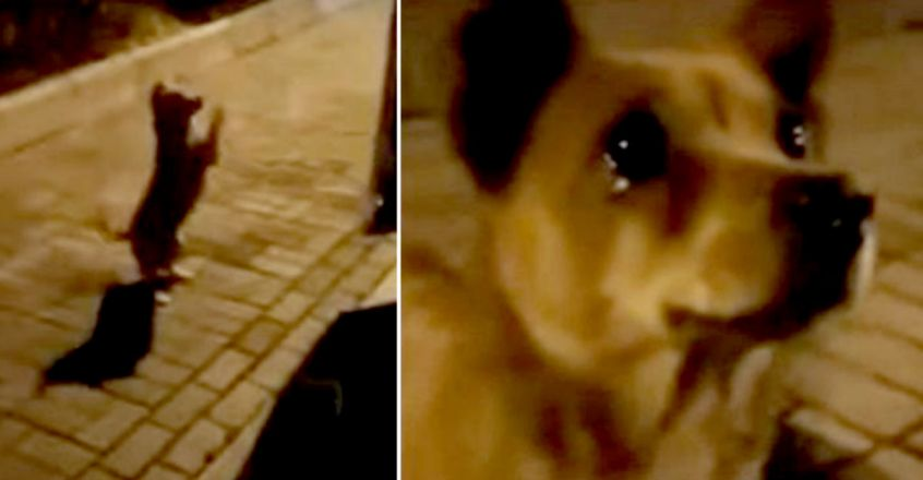 Stray dog appears to 'cry' as stranger gives him food in heartbreaking footage