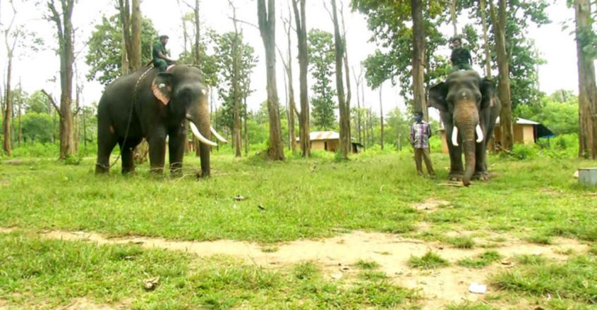 These jumbos help diffuse man-animal conflicts