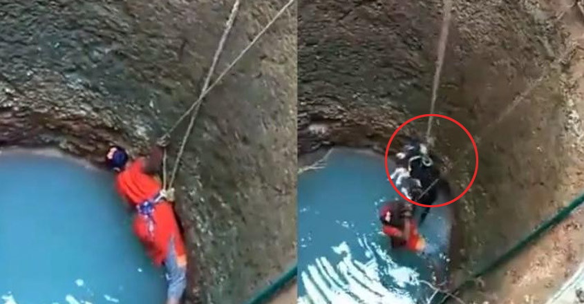 Stray Dog Accidentally Falls Into Well, Mangalore Woman Risks Life To Save Him