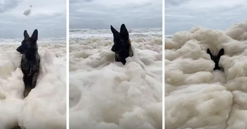 Dog Engulfed by Seafoam