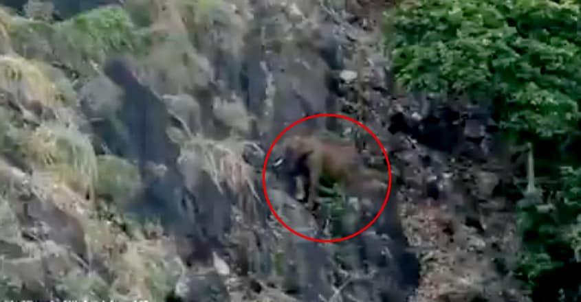 An elephant climbing a Steep mountain of Nilgiris