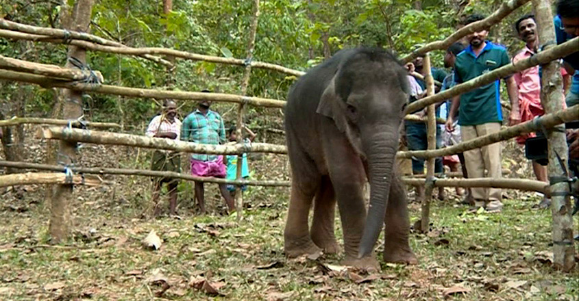 Stranded baby elephant rescued