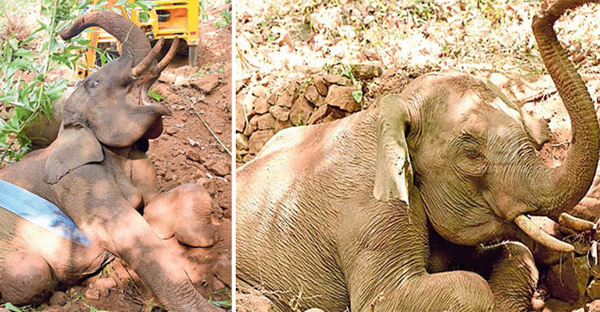Baby elephant rescued in Kannur
