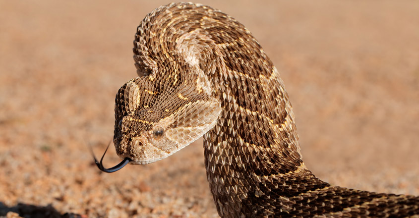 Venomous snake bite recorded for first time in Irish history