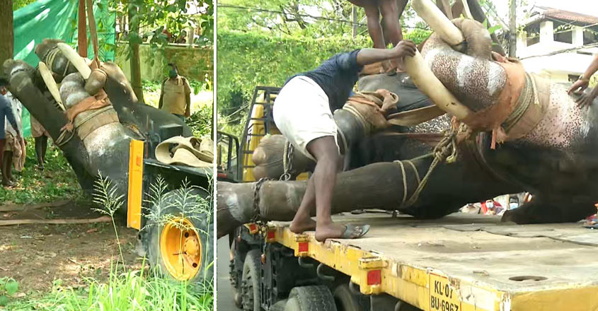 temple tusker Seetharaman collapses and dies
